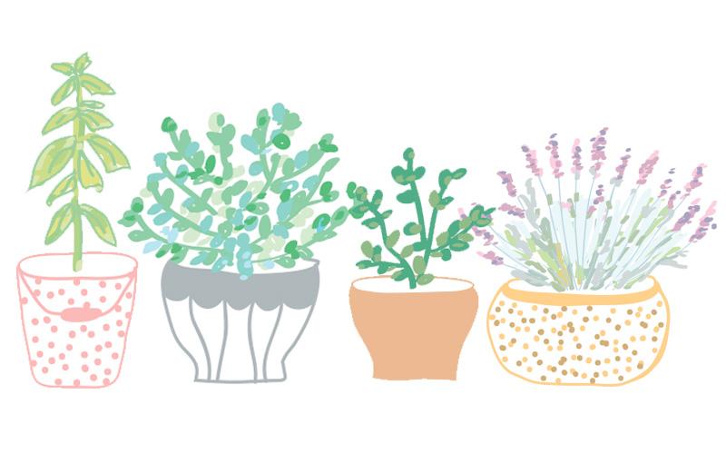 4 aromatiques purifiantes pour la maison et le corps!