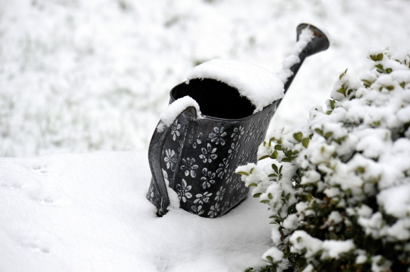 Pourquoi inviter ses légumes et herbes chez soi pour l'hiver ?