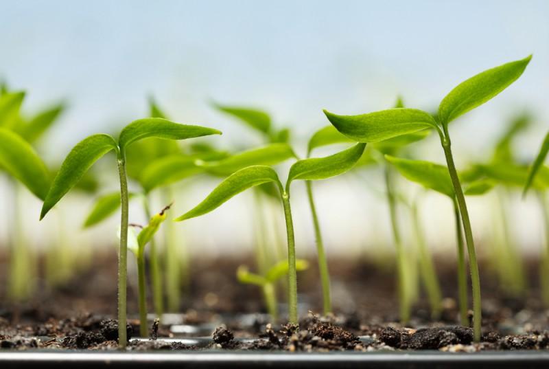 Nos 3 bonnes raisons de se mettre au jardinage d int rieur for Jardinage d interieur