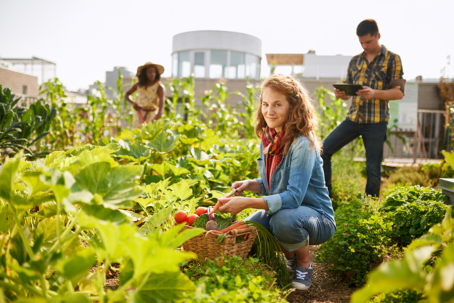 L'agriculture urbaine se développe : cultures agricoles sur les toits de Paris