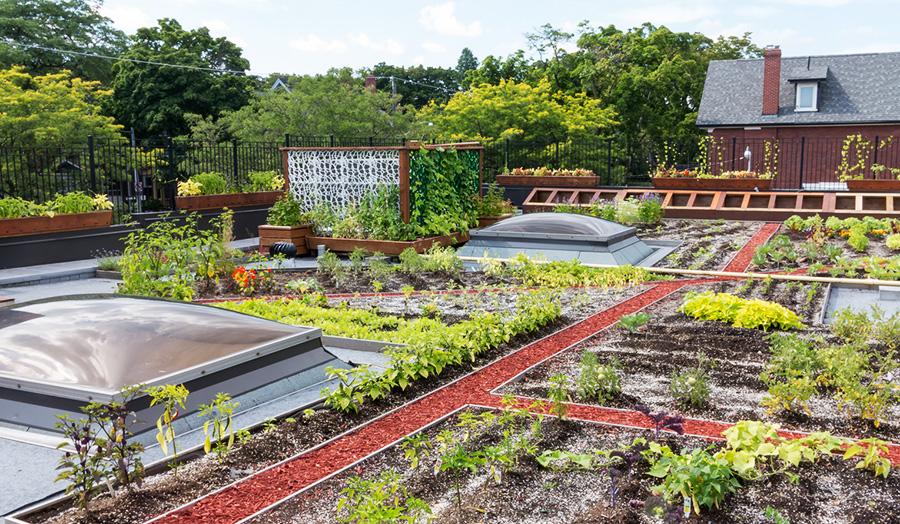 Jardins sur les toits de Paris
