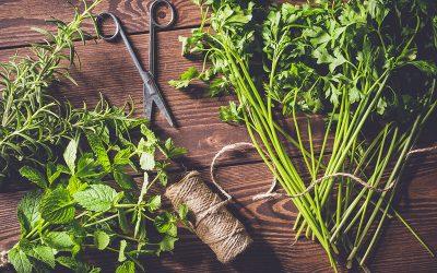 Bien récolter les plantes aromatiques de son jardin d'intérieur