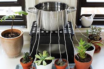 arroser ses plantes par capillarité pendant les vacances avec une ficelle