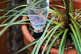 arroser ses plantes vertes pendant les vacances avec une bouteille d'eau retournée