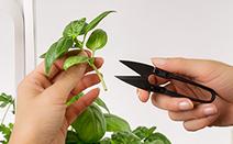 mini ciseaux à herbes du jardin d'intérieur veritable