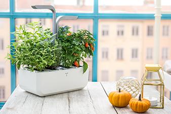 10 astuces pour pr server ses plantes pendant les vacances. Black Bedroom Furniture Sets. Home Design Ideas