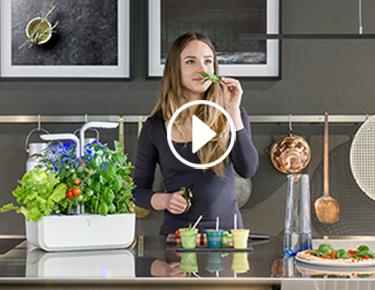 Jardin d'intérieur pour cuisine
