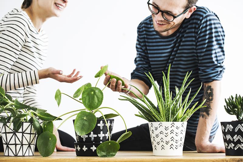 Améliorez votre bien-être au travail avec ces plantes qui vous motivent !