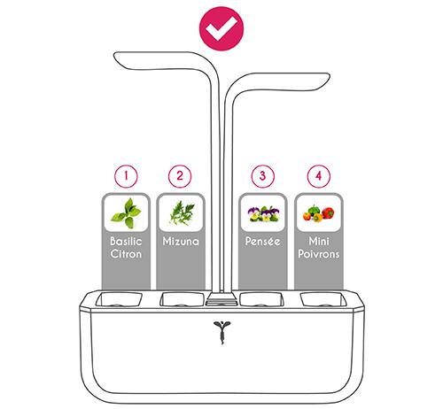 Disposition des Lingots Mizuna, Basilic Citron, Mini Poivrons et Pensée dans le Potager Véritable