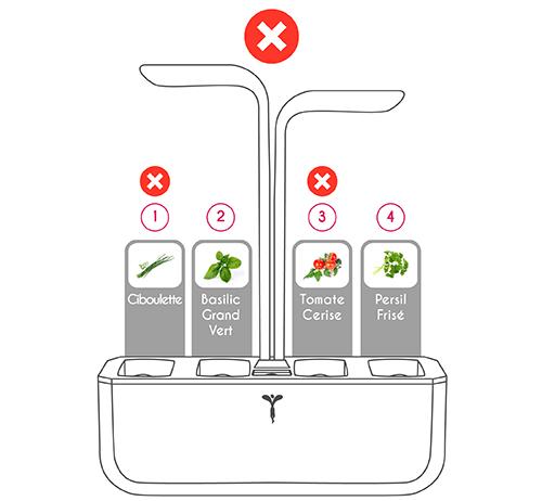 Disposition incorrecte des Lingots Ciboulette, Basilic Citron, Tomate Cerises et Persil Frisé