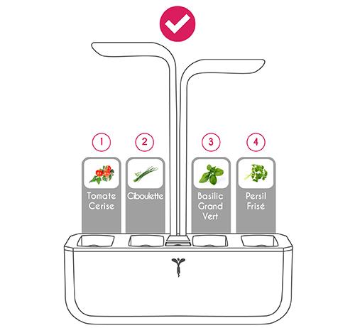 Disposition correcte des Lingots Tomate Cerise, Ciboulette, Basilic Grand Vert et Persil Frisé, dans le Potager Véritable