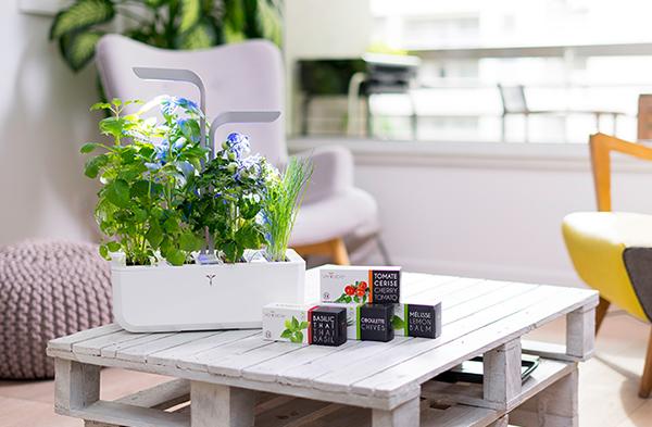 5 astuces pour bien disposer vos plantes dans le potager v ritable. Black Bedroom Furniture Sets. Home Design Ideas