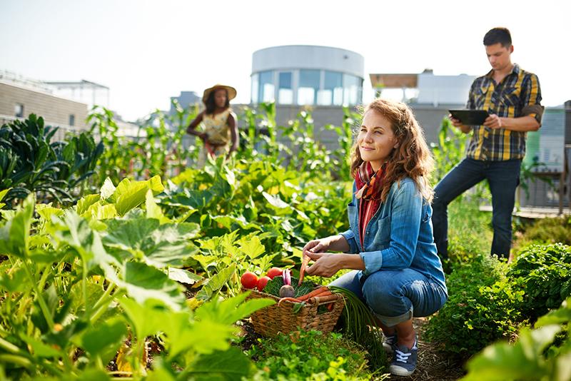 agriculture urbaine sur un toit