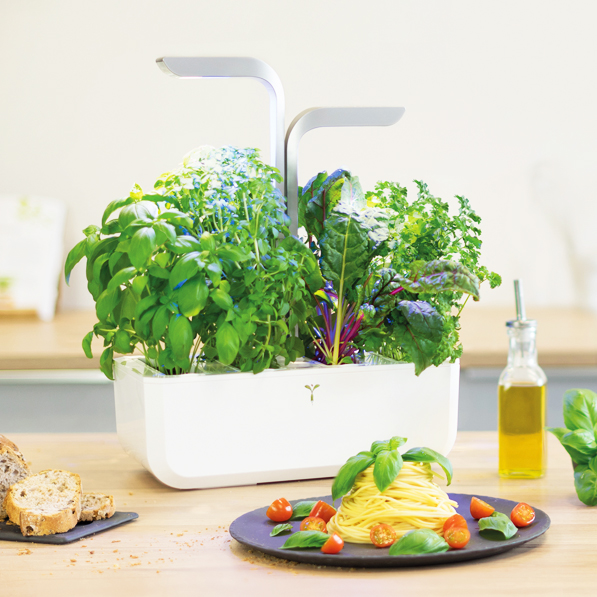 photo culinaire veritable potager pates basilic startups